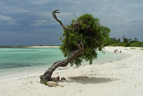 Praia de Aruba...Foto: Flickr: Serge Melki